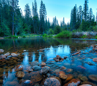Road Trip Planner >> Wawona Campground | Discover Yosemite National Park
