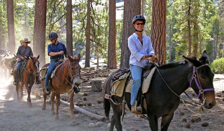 What to Do in Yosemite During Summer