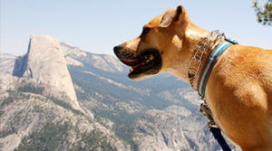 Yosemite-Dog-Blog-Image