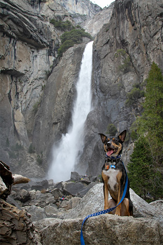 Tig and Mort at Yosemite by dogthusiast.com