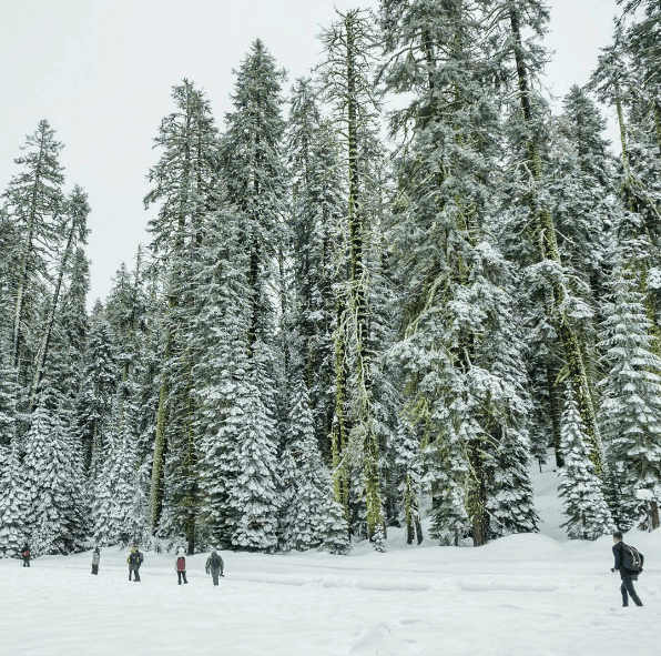 Yosemite Mariposa Winter FAQs