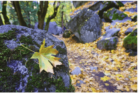 Top 10 #YosemiteNation Instagram Photos for Fall Colors