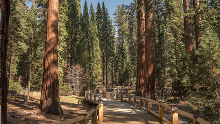 Mariposa Grove Reopens