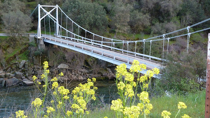 Wildflowers and Briceburg Bridge