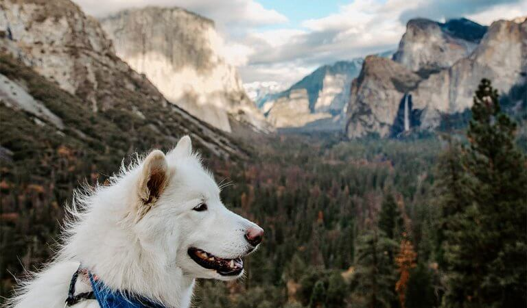 Yosemite Dog Lover's Itinerary