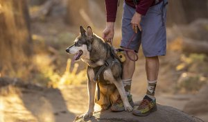 Dog with owner on a hiking trail