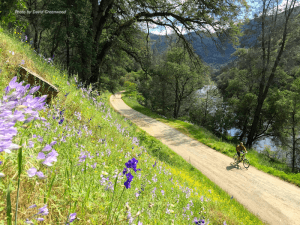 the merced river trail with wildflowers